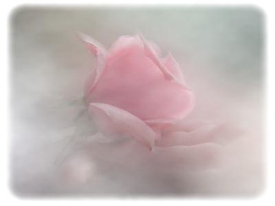 rosebrume.jpg